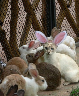 imposter-bunny